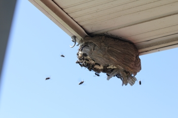 Wasps nest underneath porch overhang